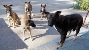 Какой подход к решению проблемы бездомных животных в ДНР Вы видите оптимальным?