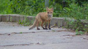 Какой подход к решению проблемы диких животных в ДНР Вы видите оптимальным?