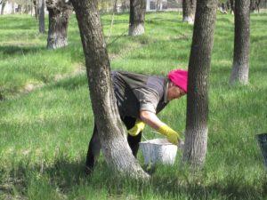 Запретить побелку деревьев