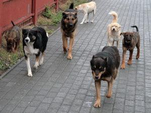 Организовать безвозвратный отлов собак с пожизненным содержанием за счет бюджетных средств